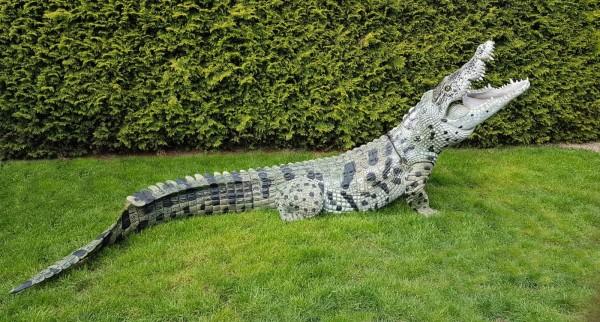 3D Ziel NaturFoam Nil Krokodil