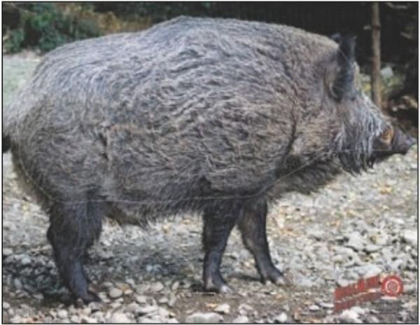 Dura-Mesh Scheibenauflage Wildschwein