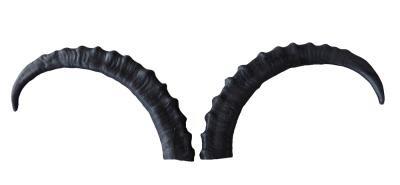 Ersatz Hörner für den Steinbock von LG Animals