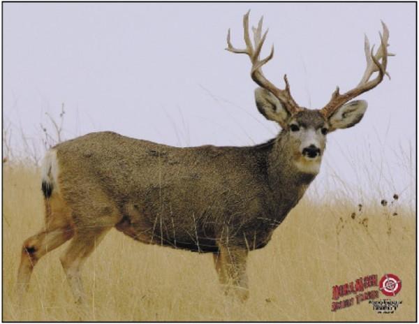 Dura-Mesh Mule Deer