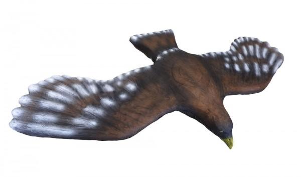 Leitold fliegender Steinadler