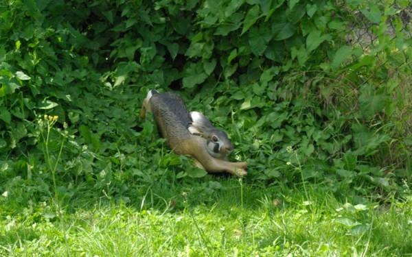 NaturFoam rennender Hase