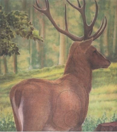 Tierbild-Scheibenauflage Hirsch