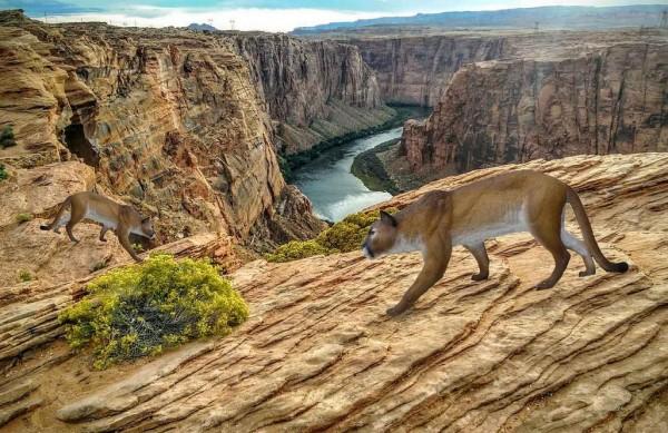 3D Ziel SRT Puma