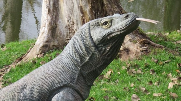 3D Tier NaturFoam Komodowaran