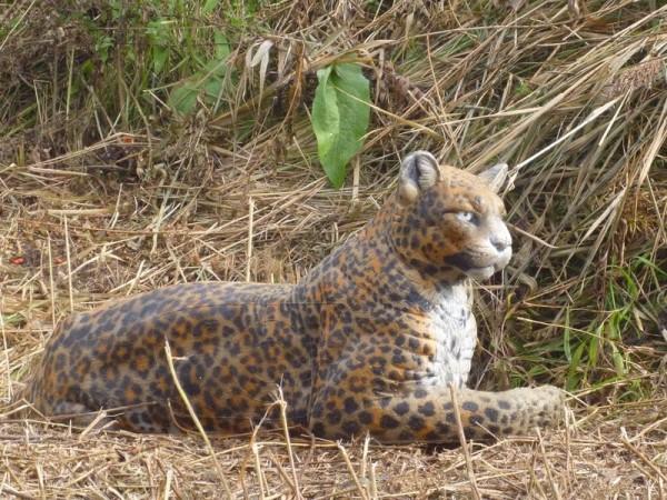 3D Tier NaturFoam Leopard