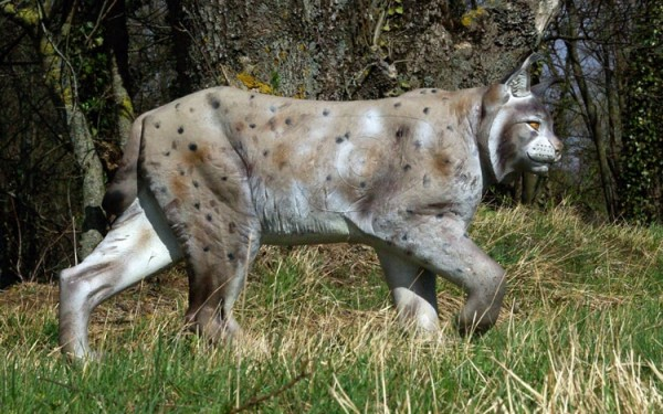 NaturFoam Luchs laufend