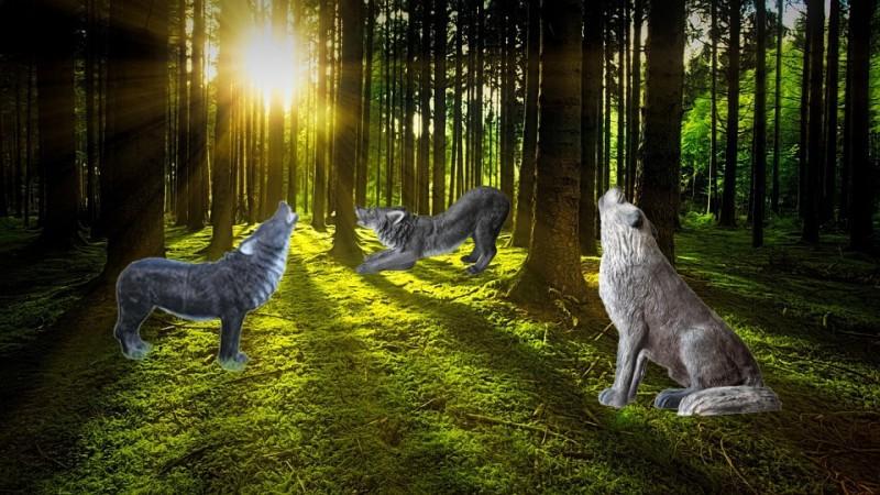 Ziele zum Bogenschie/ßen Bogensport Targets stehender Marder 3D-Tier von Wildlife