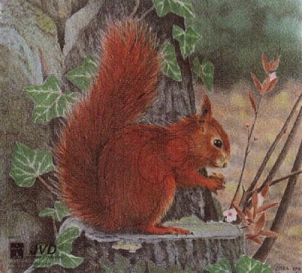 Tierbild-Scheibenauflage Eichhörnchen