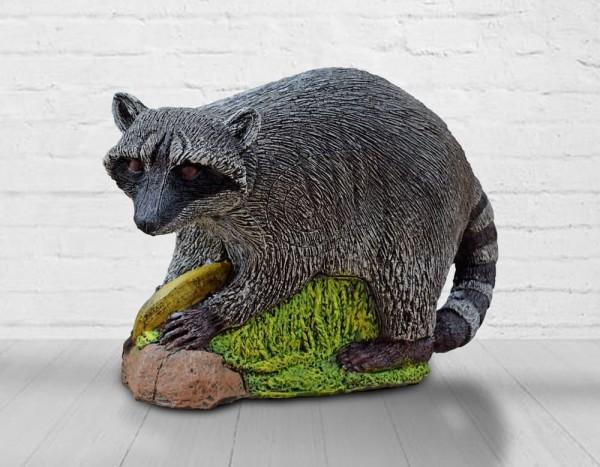 Wildcrete Waschbär